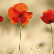 Under the counter - Don't fall foul of Tall Poppy Syndrome!